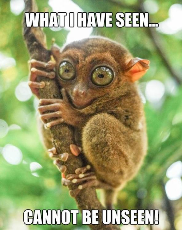tarsier-what-i-saw-cannot-be-unseenjpg.jpg