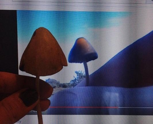 My mushroom2.png