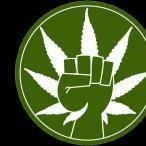 marijuanafinder