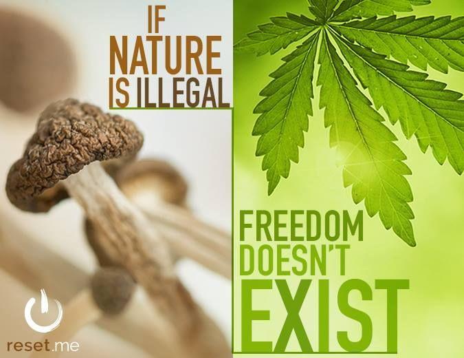 1bf0360b83781dab659b715074aa6d1c--cannabis-illusion.jpg