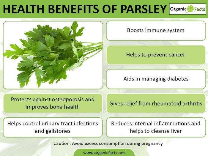 parsleyinfo.jpg