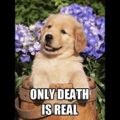 Immortality Roars