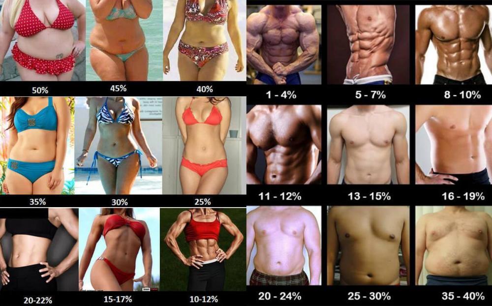Body-Fat-Percentage.jpg