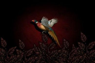 155921_pheasant_1280x800_h.jpg