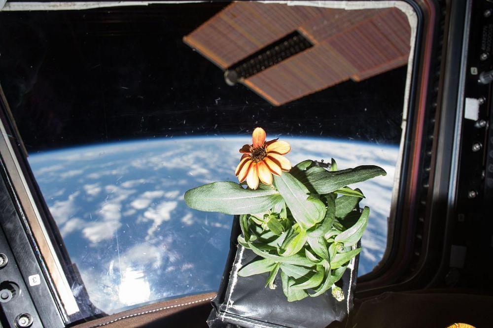 space flower.jpg