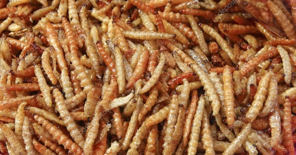 depositphotos_32442799-stock-photo-fried-bamboo-larvae-snack-in.jpg