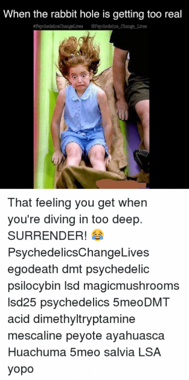 when-the-rabbit-hole-is-getting-too-real-psychedelicechangelives-psychedelics-change-lives-24699037.png