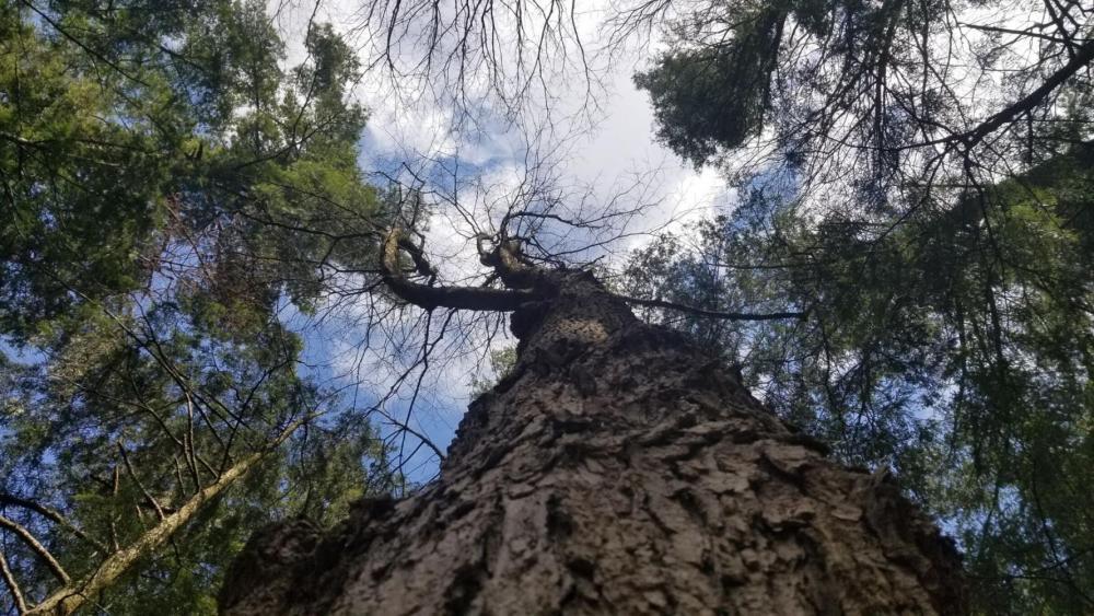 uni tree.jpg