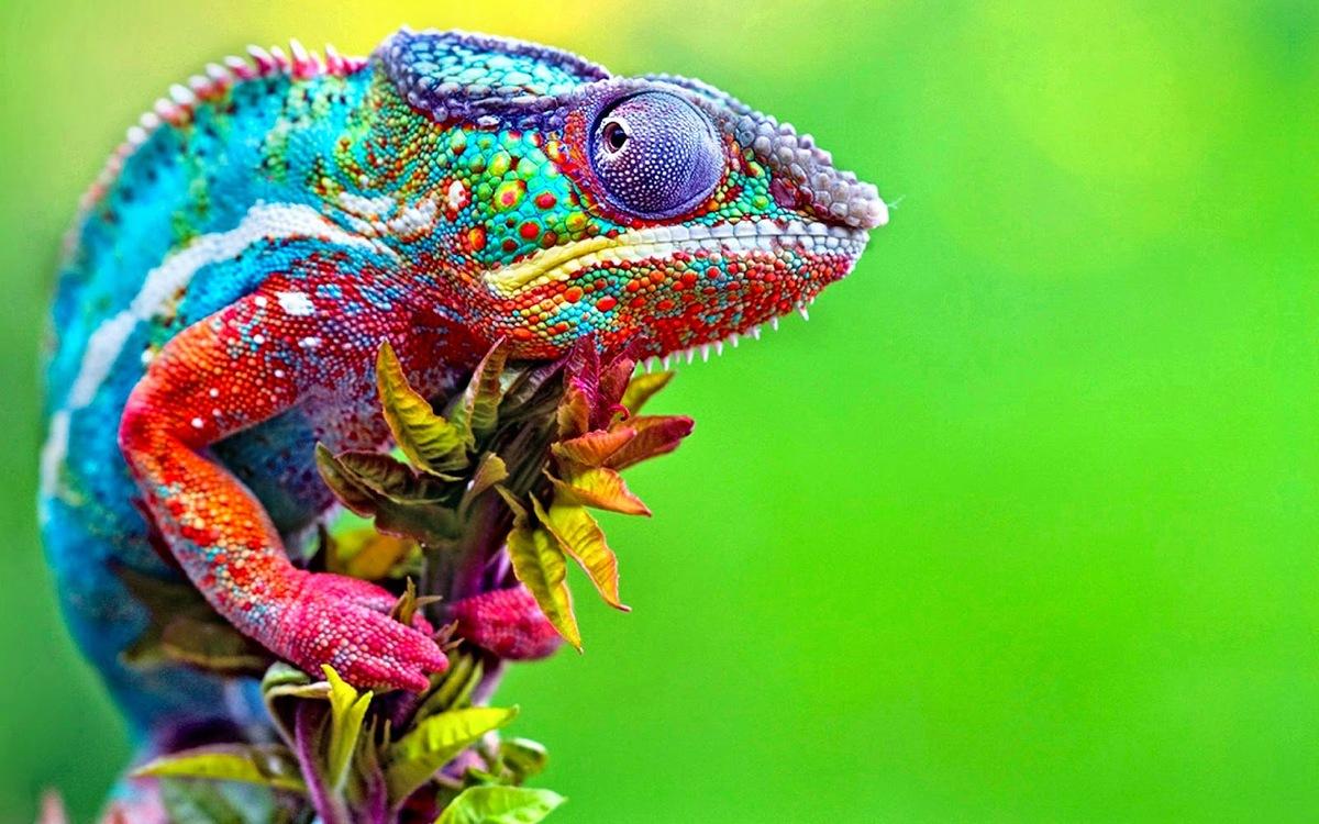 chameleon-02